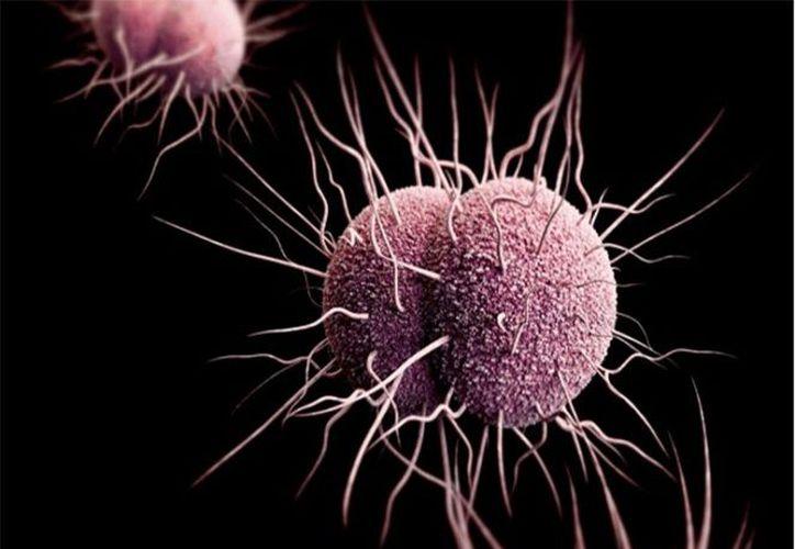 Señalan que las bacterias resisten a los tratamientos. (excelsior.com)