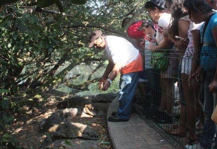 Don Ignacio tiene 10 años dando pollo a los cocodrilos de la Laguna del Carpintero en Tampico. (Milenio)