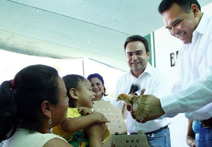 El Gobierno estatal ha distribuido más de 136,000 pollos y gallinas en 10 comunidades consideradas de mayor marginación en Yucatán. (Cortesía)