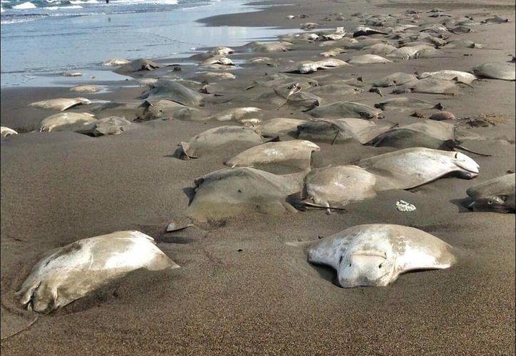 De estar contaminada la zona, habrían encontrado otras especies muertas. (Twitter.com/@moisesyoldi)