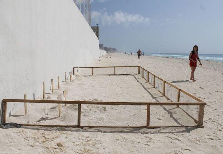 En la zona hotelera se han instalado 27 corrales para proteger los nidos de las tortugas. (Israel Leal/SIPSE)