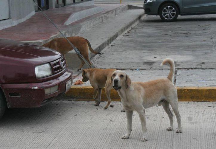 Las cenizas de los amigos más fieles ya podrán ser reclamadas en el Centro de Atención Canina (CAC) del municipio. (Oskar Mijangos/SIPSE)