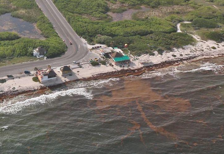 El oleaje y corrientes de la zona oriental no permitirían utilizar embarcaciones recolectoras de sargazo. (Gustavo Villegas/SIPSE)