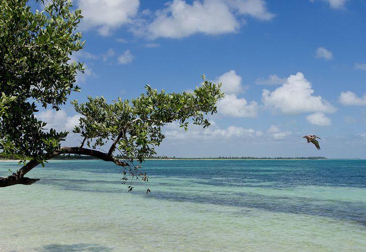 Sian Ka'an y Playa del Carmen fueron señalados por los ciudadanos como 'las playas más sucias de Quintana Roo'. (Foto: Contexto/Internet)
