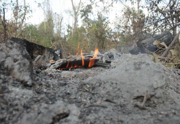 La Semarnat sigue investigando el origen de los incendios de esta temporada. (Harold Alcocer/SIPSE)