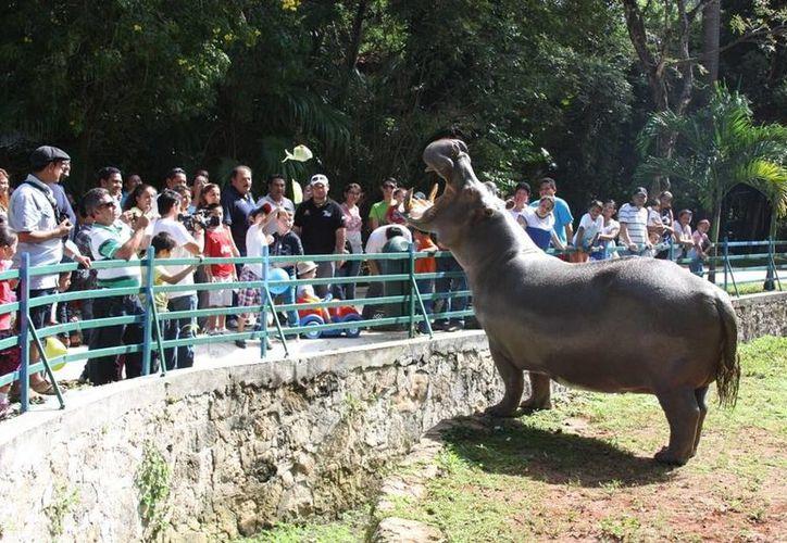 La reactivación del zoológico es una realidad. (Cortesía/SIPSE)
