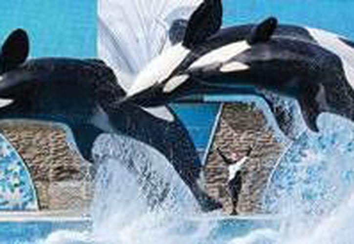SeaWorld es un lugar maravilloso para experimentar la combinación entre un parque temático y un zoológico. (Contexto/Internet)