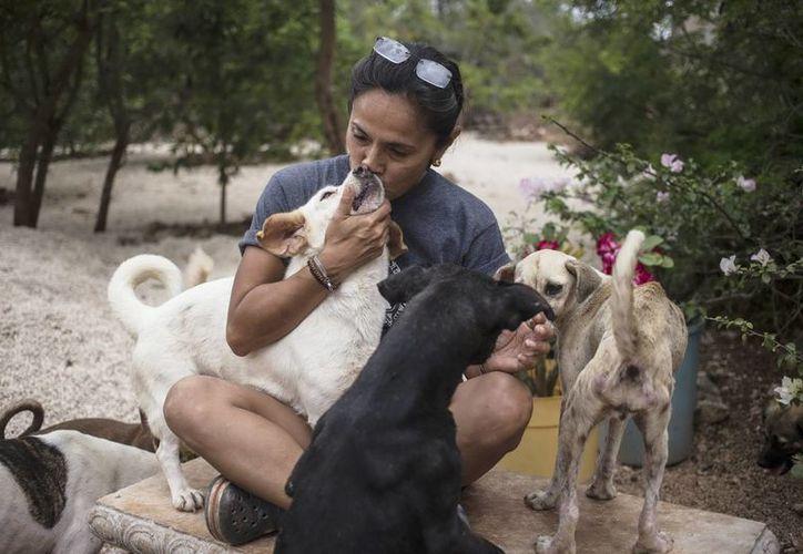 Durante la temporada de vacaciones la cifra de perros abandonados se incrementa  al doble. (Milenio Novedades)