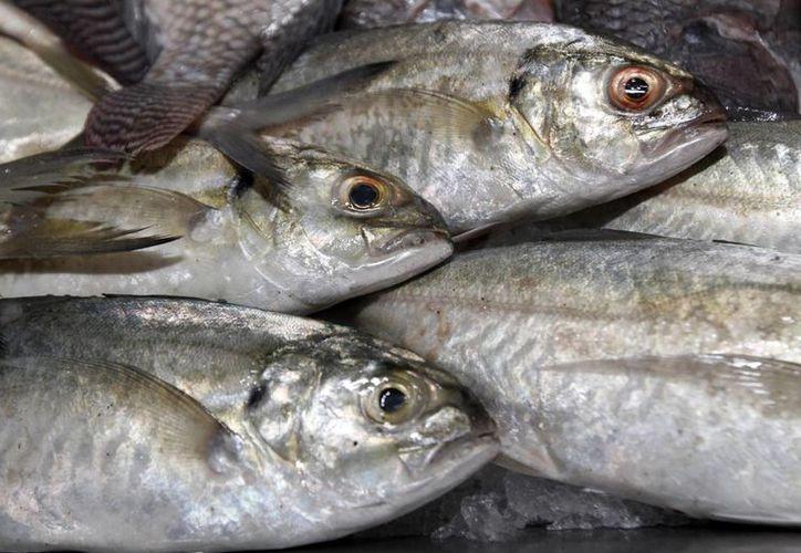 La sobreexplotación de ciertas especies favorece la degradación de los sistemas marinos, asegura académico del Cinvestav Mérida. (Archivo/Notimex)