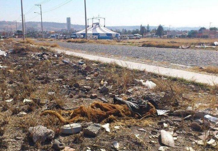 En la foto, un león yace muerto a unos metros del Circo Atayde en Querétaro. (Foto: Facebook)