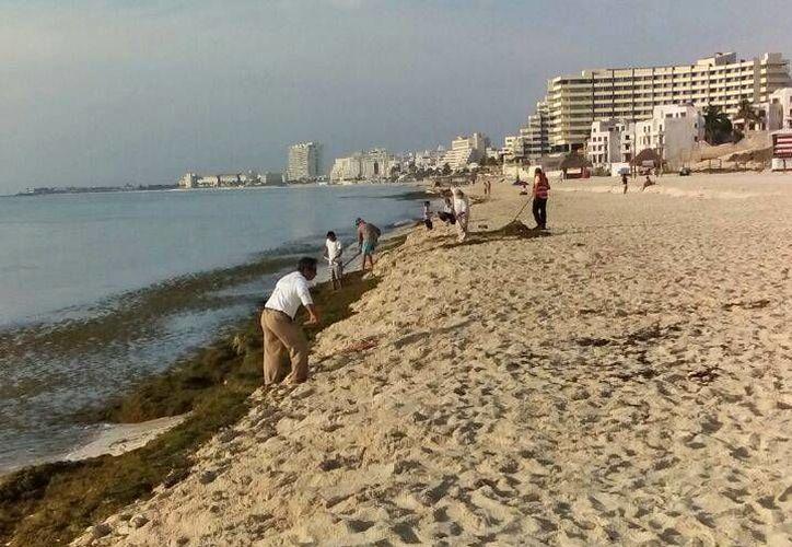 El sargazo que recaló el playa Delfines fue retirado el domingo. (Jesús Tijerina/SIPSE)
