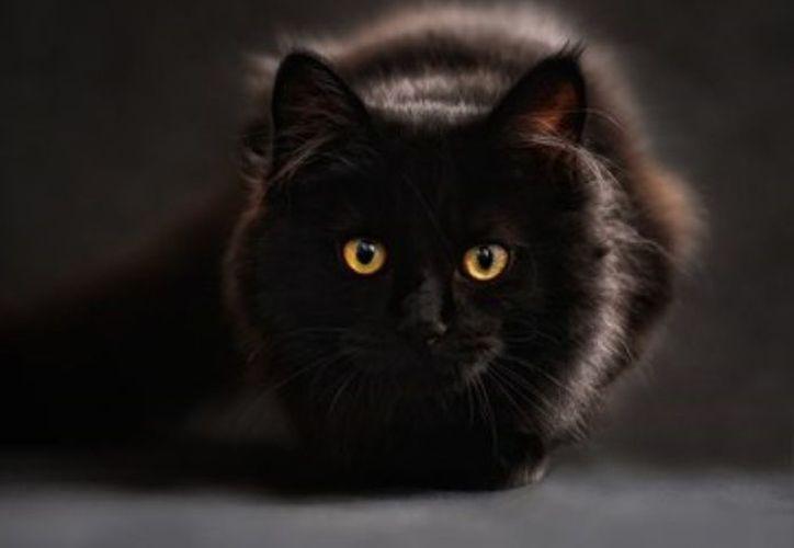 Despellejaba y mataba en vía pública a los gatos para ponerlos en venta. (foto: Internet)
