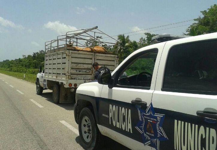 A los vehículos que transporten ganado se les pedirá que cuenten con la documentación respectiva del animal. (Javier Ortiz/SIPSE)
