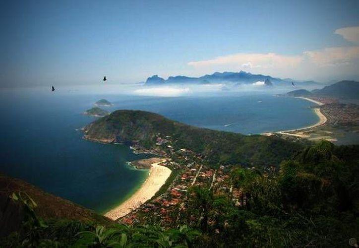 Los árboles talados en el parque nacional Serra da Tiririca fueron 334.  (aidobonsai.com)