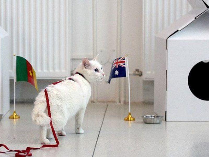 En la actualidad, cerca de 70 gatos protegen el museo de los ratones. (AP)