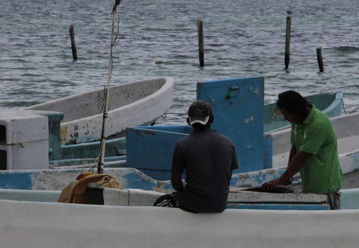 En la entidad hay 25 cooperativas pesqueras con un aproximado de 833 pescadores registrados. (Redacción/SIPSE)