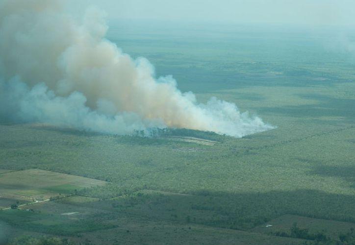 El incendio forestal atípico El Chechén continúa activo en la Reserva del a Biósfera de Sian Ka'an. (Cortesía)