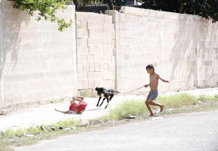 Muchos animales de compañía de Yucatán nunca reciben vacunas o tratamientos. (Juan Carlos Albornoz/SIPSE)