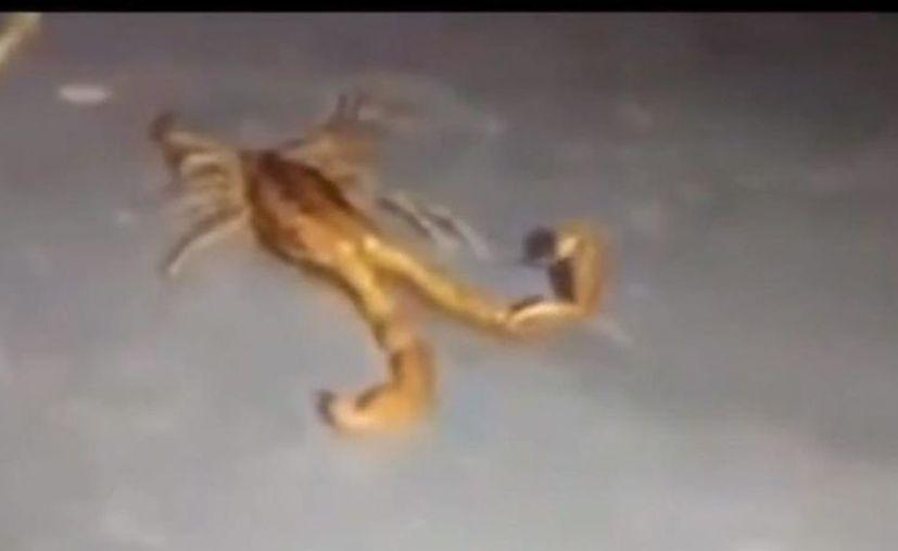 Foto: Captura de pantalla del video.