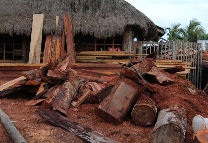 Quintana Roo produce 32% de las maderas tropicales preciosas del país. (Luis Soto/SIPSE)