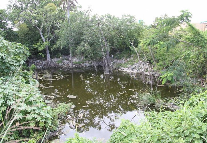 Las autoridades de Ecología del Ayuntamiento de Benito Juárez  realizan un censo para determinar la cantidad de cenotes de Quintana Roo. (Tomás Álvarez/SIPSE)