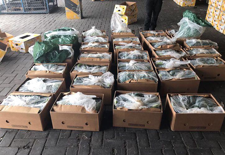 La cocaína decomisada, presuntamente pertenecía a una estructura de narcotráfico asociada a la organización 'Clan del Golfo'. (Contenido/ Internet)