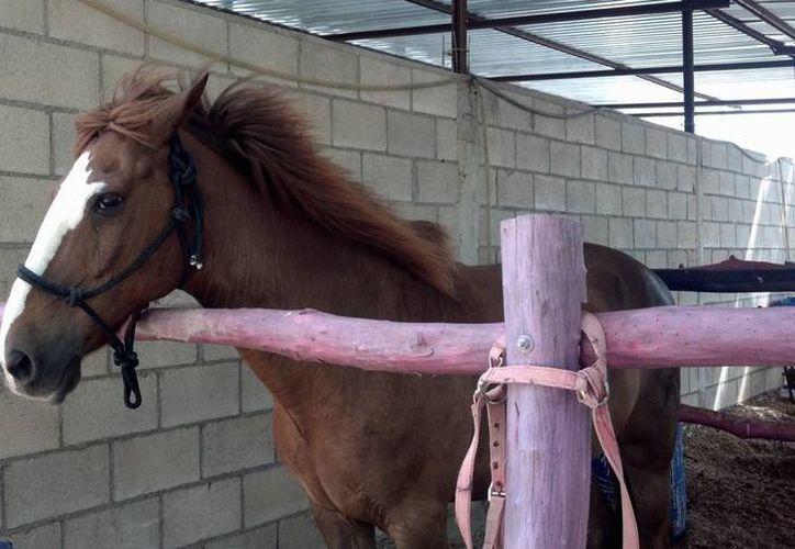 Lucero, caballo que participaba en terapias del DIF Tulum, murió a los 20 años en marzo. (Cortesía)