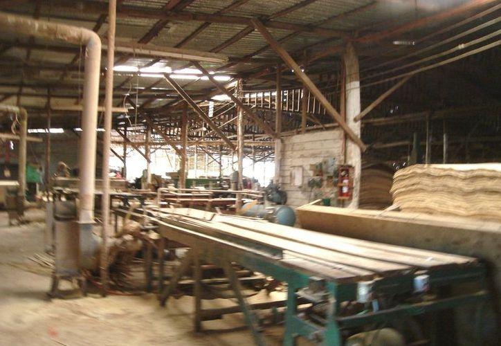 Ante la escasez de la materia prima, muchos trabajadores se han visto obligados a renunciar y otros aceptar el pago del 50% de su salario; pero esto es a causa de la falta de comercialización del producto, dicen. (Carlos Yabur/SIPSE)