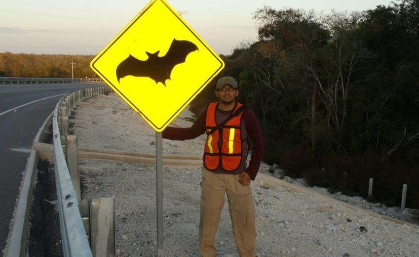 Las obras carreteras generaron 'bajas' en la población de murciélagos del 'volcán'.