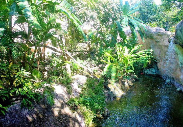 Hermosa extensión de selva tropical del estado.(Ángel Castilla/SIPSE)