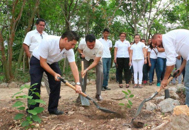 Como parte del programa Jóvenes y responsabilidad social, estudiantes de la Uady sembraron 300 árboles en el parque 'Yumtsil'. (Cortesía)