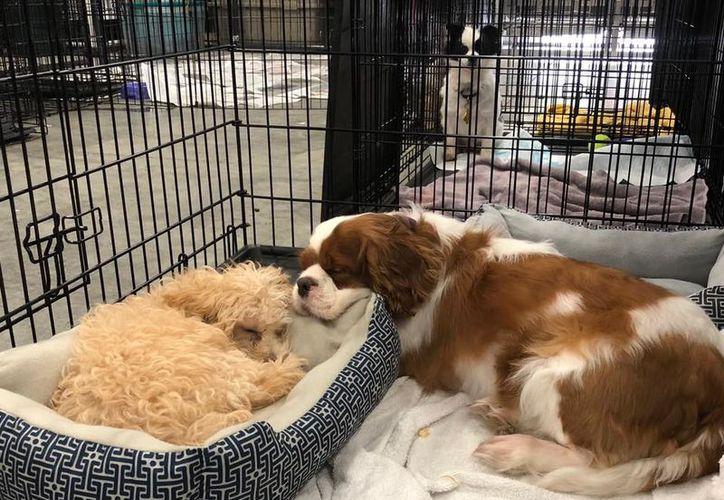 Decenas de perros están en cuarentena tras ser sospechosos de haber contraído brucelosis.  (Facebook/AHeinz57 Pet Rescue and Transport)
