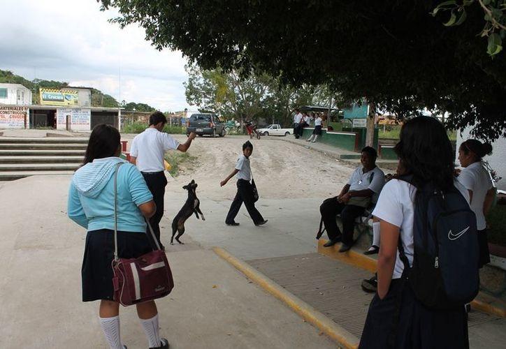 A los jóvenes que participen se les proveerá los recursos necesarios para llevar a cabo las tareas y a cambio recibirán un sueldo. (Edgardo Rodríguez/SIPSE)