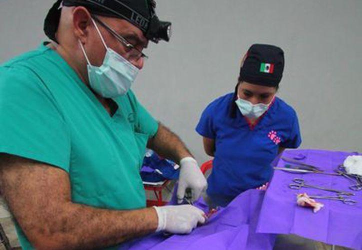 Ayer terminó la campaña de esterilización que se realizó en la isla del 4 al 8 de junio.  (Gustavo Villegas/SIPSE)