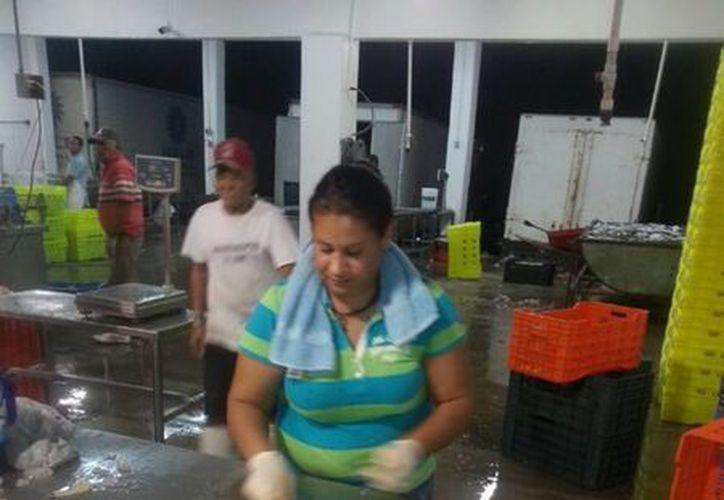 La veda del camarón en aguas marinas desde la frontera entre Nayarit y Jalisco, y sistemas lagunarios estuarinos de Colima, será a partir del 13 de marzo. (Notimex/Contexto)