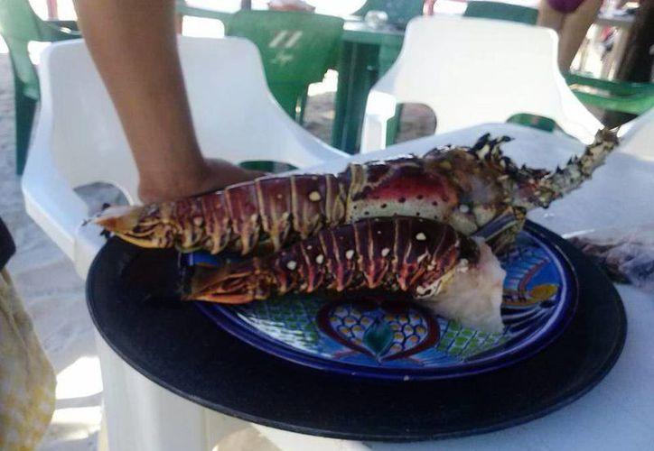 Entre los proyectos financiados por el Fonaes en Yucatán está la exportación de langosta viva, para el mercado asiático. (SIPSE)