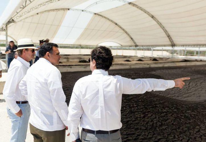 El gobernador del Estado, Rolando Zapata, inauguró dos plantas de producción porcícola. (Milenio Novedades)