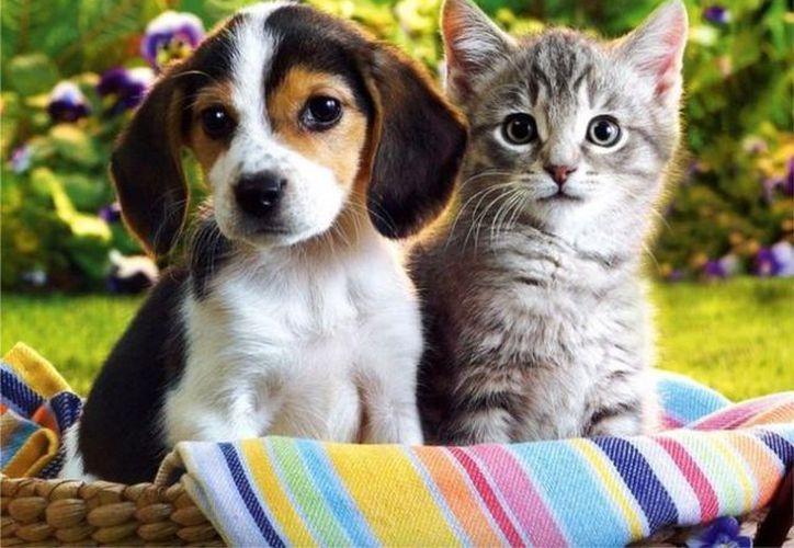 Los perros son amigables, los gatos son inteligentes, ¿será verdad? (Contexto/Internet).