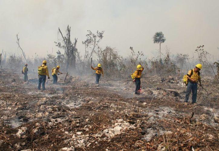 Durante los últimos tres años se han devastado por incendios 24 mil hectáreas. (Javier Ortiz/SIPSE)