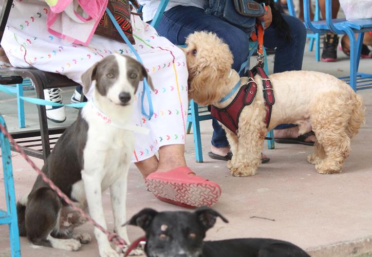 La campaña no fue suspendida gracias grupos en pro del bienestar animal. (Redacción/SIPSE)