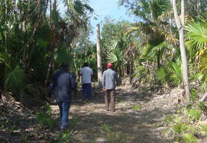 Varias especies de flora de los predios resultaron afectadas por las actividades de remoción en el Ejido Calderitas, en Chetumal. (Redacción/SIPSE)