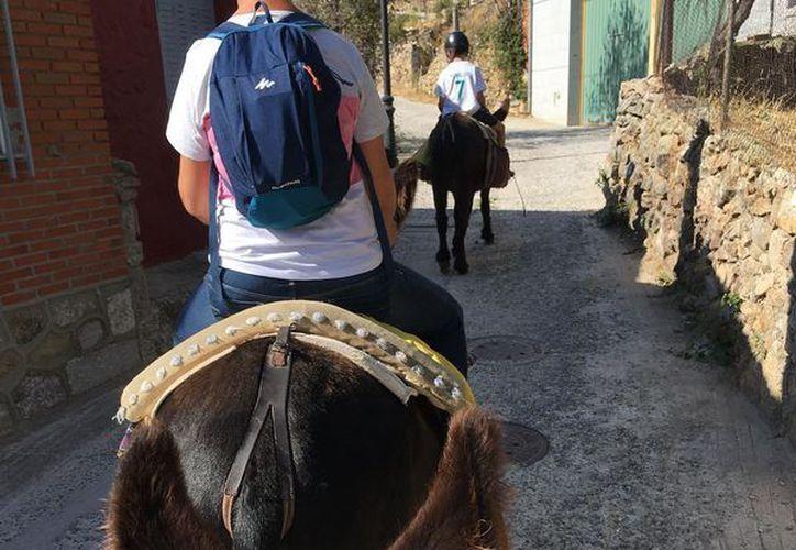 Los turistas deberán pesar menos de 100 kilos para poder montar a burros o mulas en la zona turística de Santorini. (foto: Contexto)
