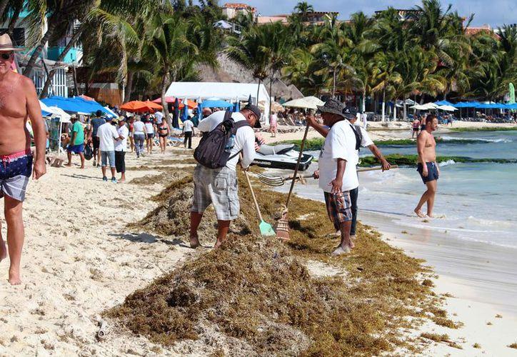 El sargazo ahuyente a los turistas de las playas. (Octavio Martínez/SIPSE)