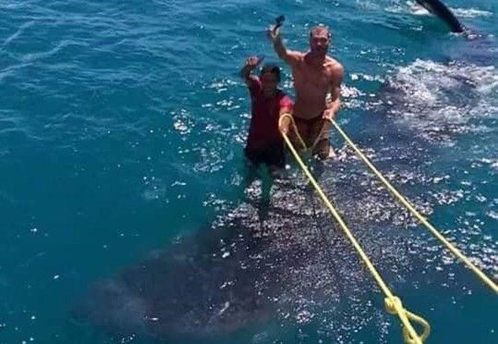 Las imágenes de dos hombres parados sobre un tiburón ballena causaron indignación en Facebook. (Facebook/Pedro J Narvaez M)