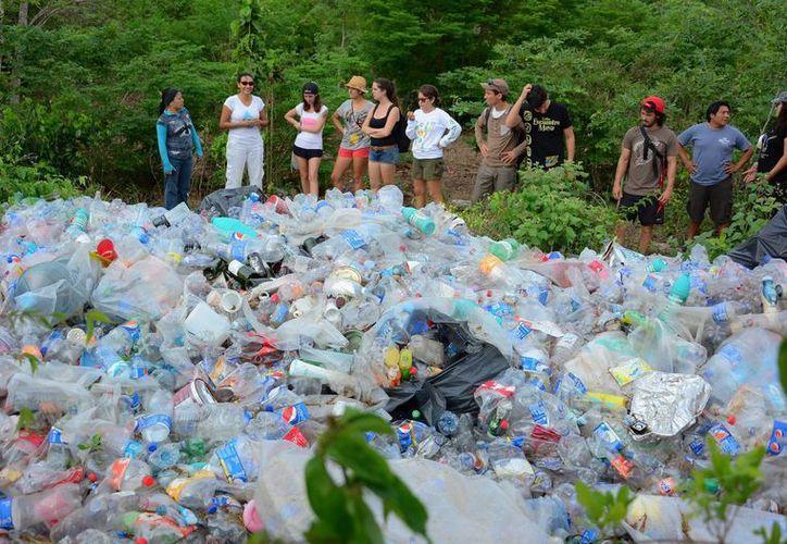 La actividad se realizó con motivo del Día Mundial del Medio Ambiente, es un programa de sensibilización y educación ambiental. (Luis Soto/SIPSE)