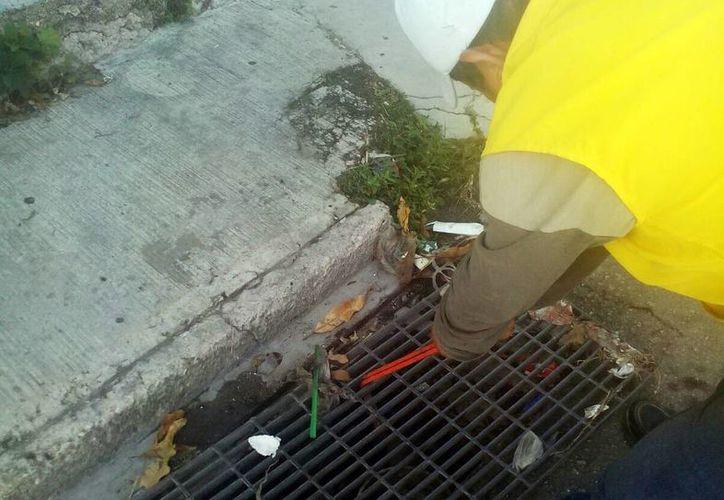 Afirman que el Ayuntamiento colabora en el combate al vector del dengue y chikungunya. (Milenio Novedades)
