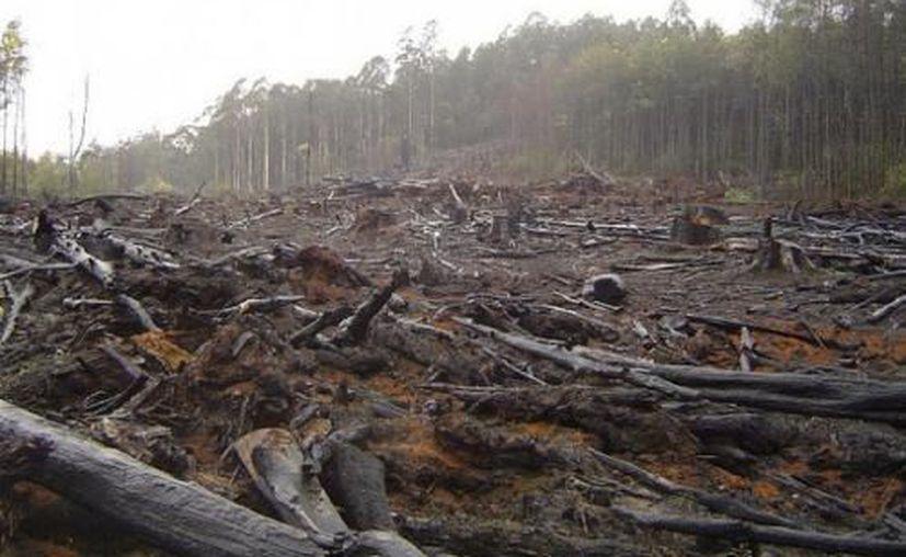 México ocupa el onceavo lugar en la lista de países con mayor superficie de bosques y selvas. (Contexto/Internet)