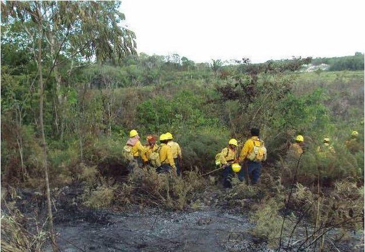 """19 brigadistas forestales de la Conafor combaten el incendio """"El Desmayado"""" en Bacalar. (Redacción/SIPSE)"""