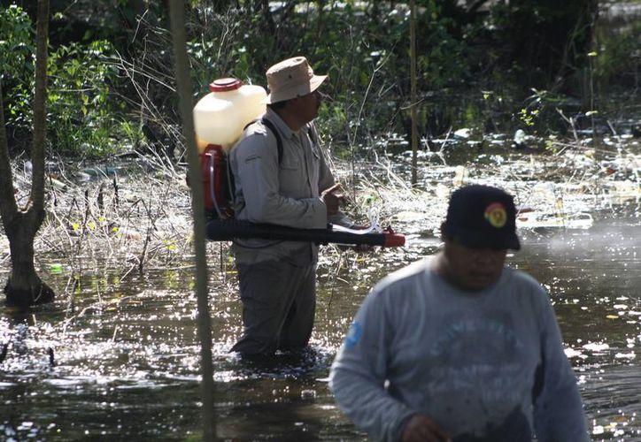 A lo largo de la ribera del río Hondo se aplican nebulizaciones para evitar que el vector se propague y aumente la incidencia; también se pide evitar cacharros en los hogares donde se estanque el agua. (Harold Alcocer/SIPSE)