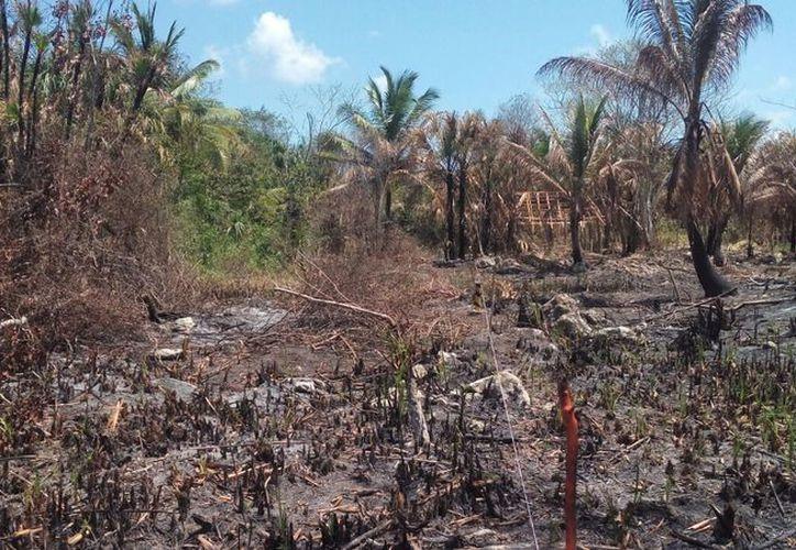 Habitantes aseguran que se han quemado cerca de 9 metros cuadrados de carrizos. (Javier Ortíz/ SIPSE)
